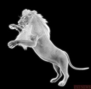 gura leului